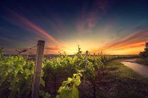 The Greek Wine Experience, Argostolion, Greece