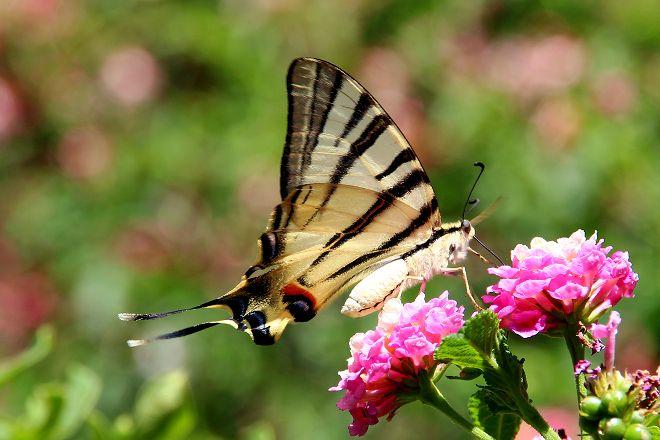 Botanical Park & Gardens Of Crete, Fournes, Greece