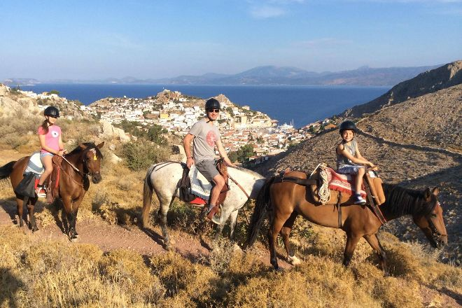Harriets Hydra Horses, Hydra Town, Greece