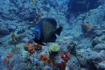 Tropicalsub Diving