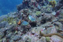 Tropicalsub Diving, Deshaies, Guadeloupe