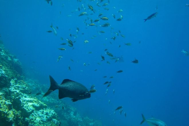 Jacques Cousteau's Underwater Reserve, Guadeloupe