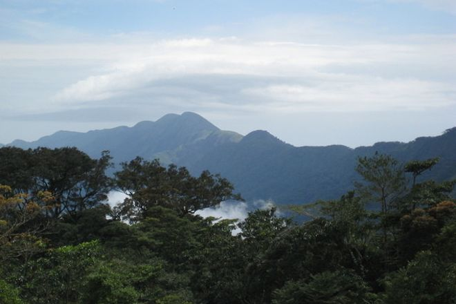 Mount Nimba Strict Nature Reserve, Guinea