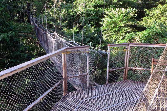 Iwokrama Canopy Walkway, Iwokrama Forest, Guyana