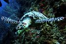 Alton's Dive Center