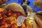 Octopus Dive School