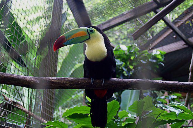 Macaw Mountain Bird Park & Nature Reserve, Copan Ruinas, Honduras