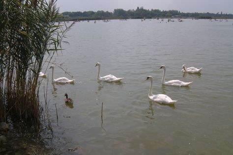 Dunaujvaros