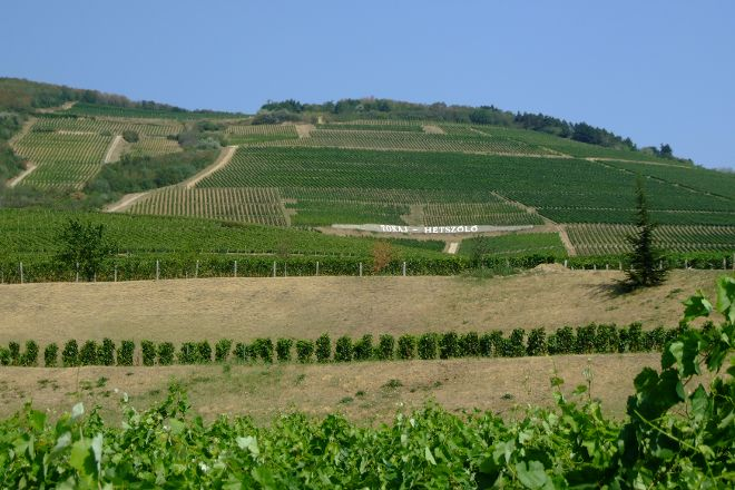 Tokaj Wine Region, Borsod-Abauj-Zemplen County, Hungary