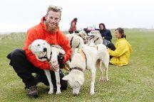 Dogsledding Iceland, Selfoss, Iceland