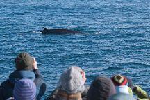 Elding Whale Watching, Reykjavik, Iceland