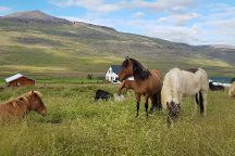 Lytingsstadir Riding Tours, Varmahlid, Iceland