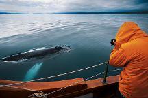 North Sailing, Husavik, Iceland