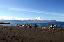 Saltvík Horse Rental