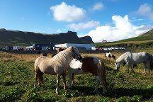 Vik Horse Adventure, Vik, Iceland