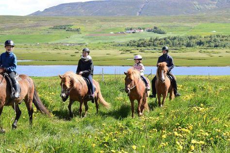Tvistur Horse Rental, Dalvik, Iceland