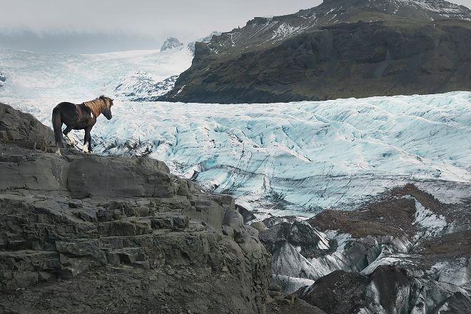 Glacier Horses, Svinafell, Iceland