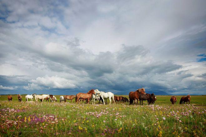 Hestaland, Borgarnes, Iceland