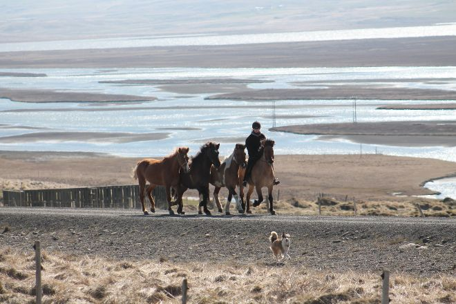 Iceland Horse Tours, Saudarkrokur, Iceland