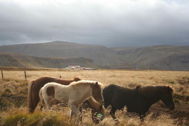 Reykjavik Riding Center, Reykjavik, Iceland