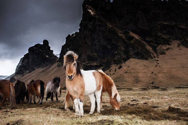Viking Guide private tours, Keflavik, Iceland