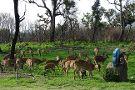 Bandipur National Park and Tiger Reserve