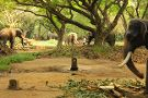 Elephant Camp Sanctuary