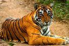 India Wildlife Safari