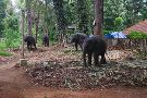 Kodanand Elephant Training Centre