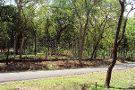 Marayoor Sandalwood Forest