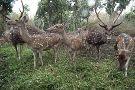Nisargadhama Forest