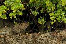 Sundarban Nature Club
