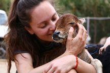 Animal Aid Unlimited, Udaipur, India