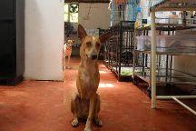 Animal Shelter Agonda, Agonda, India