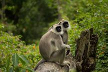 BRT Wildlife Sanctuary, Bandipur, India
