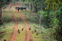 Dalma Wildlife Sanctuary, Jamshedpur, India