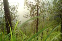 Gilbert Trail, Kasauli, India