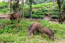 Indira Gandhi Wildlife Sanctuary and National Park, Valparai, India