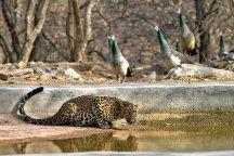 Jhalana Panther Safari