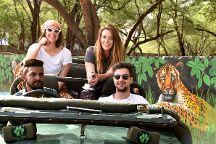 Jhalana Panther Safari, Jaipur, India