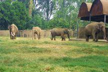 Mahendra Chaudhary Zoological Park, Zirakpur, India