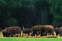 Musafir Day Tours, Munnar, India