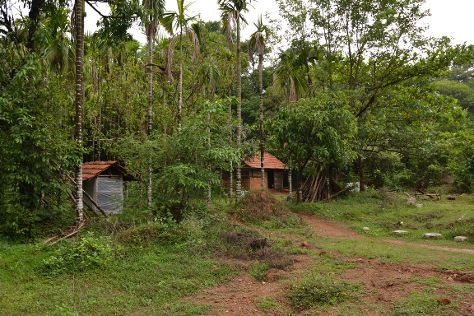 Agumbe Rainforest Research Station, Agumbe, India