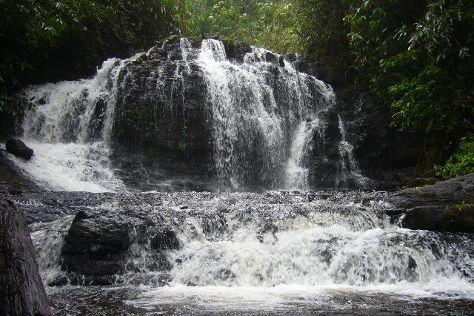 Gavi Forest, Thekkady, India