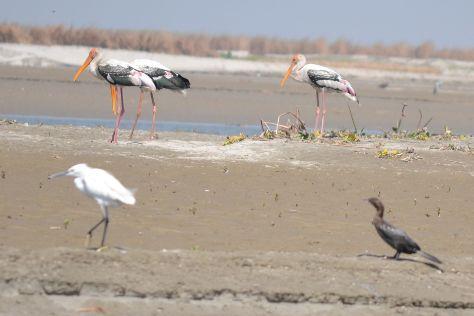 Hastinapur Wildlife Sanctuary, Meerut, India