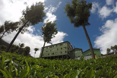 Highfield Tea Factory, Coonoor, India