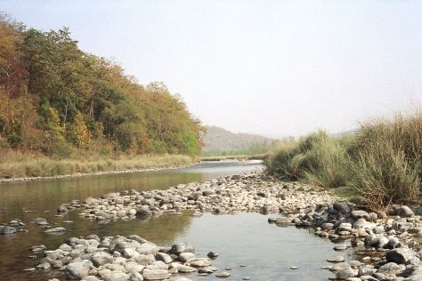Kosi River, Jim Corbett National Park, India