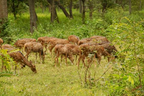 Nagarhole National Park, Hunsur, India