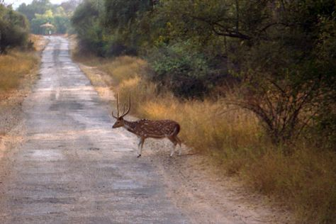Sariska Tiger Reserve, Alwar, India