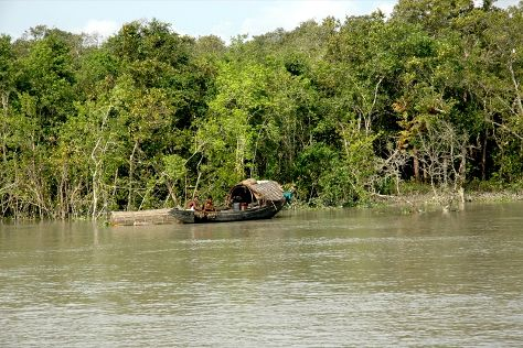 Sundarbans, West Bengal, India